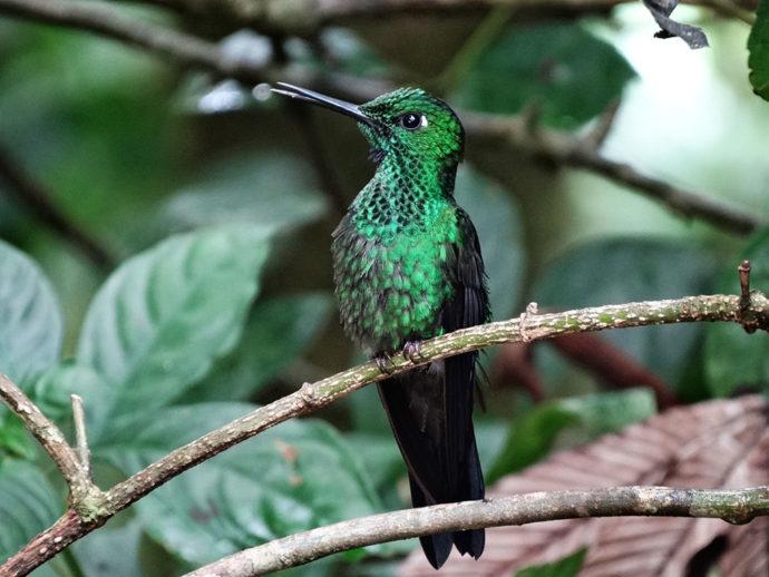 Costa Rica por Eduardo Masiero