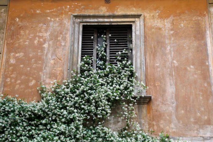 Roma por Daniella Franco