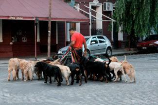 Cena comum no Palermo e na Recoleta, nesta eu contei mais de 15 cachorros