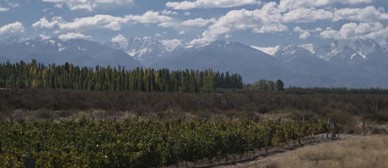 Visual de vinícola em Mendoza