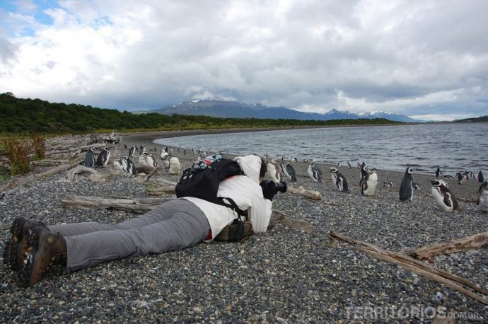 Eu deitada na m... dos pinguins