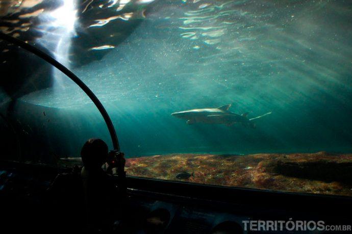 Bem perto dos tubarões