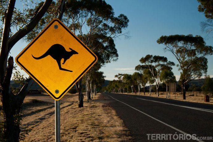 Placas de canguru nas estradas
