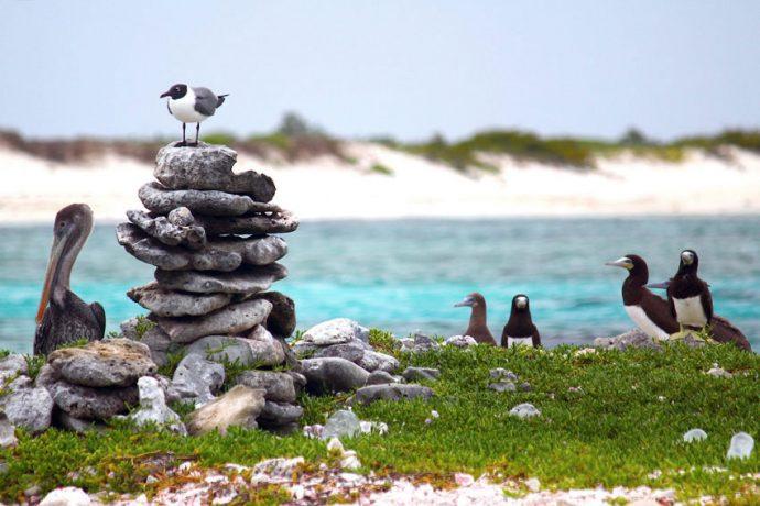 A diversidade de aves marítimas chama a atenção, em Los Roques