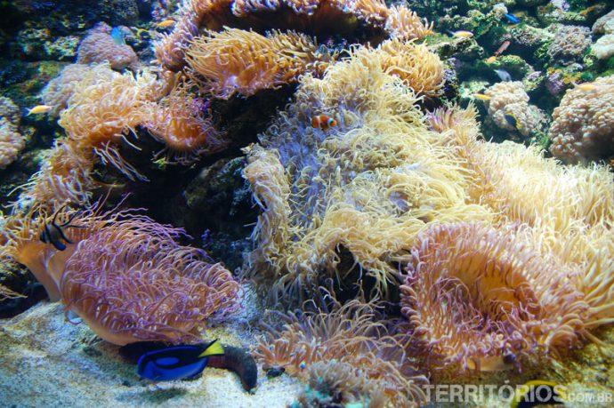 A Grande Barreira de Corais da Austrália está acessível no virtual
