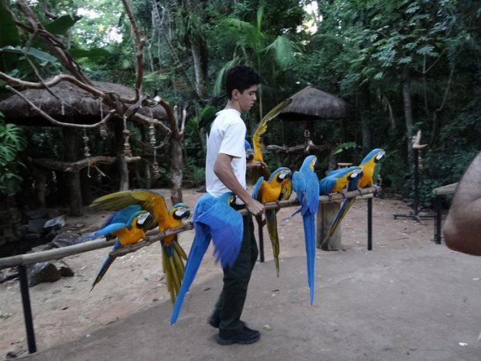 Literalmente um pau de arara no Parque das Aves
