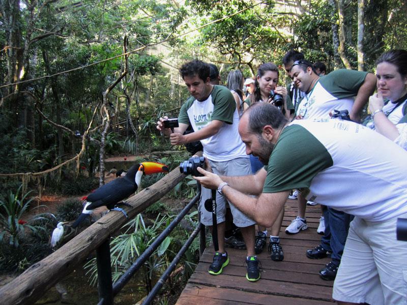 O tucano é o astro do Parque das Aves