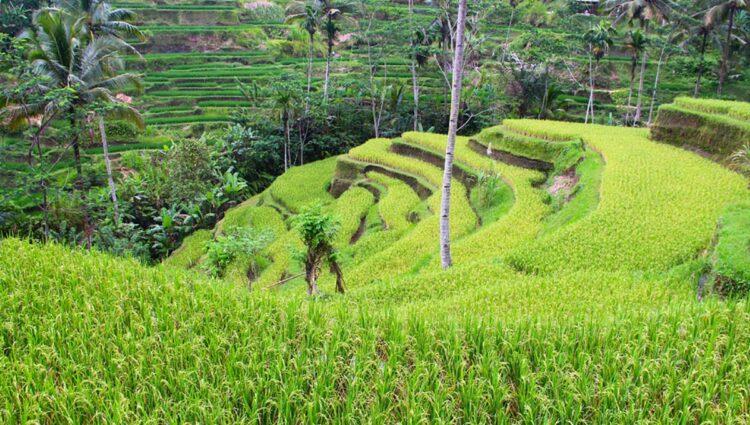 Tegalalang, Indonésia