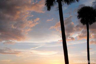 Árvores e pôr do sol típicos da Flórida