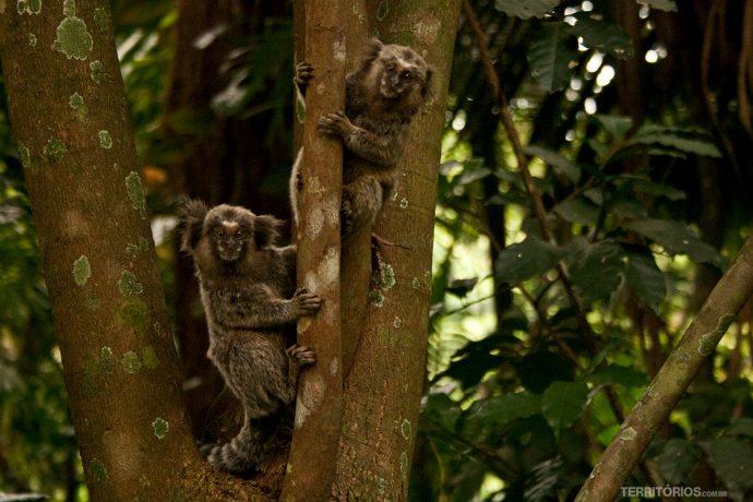 Micos são comuns nas Sinalização de uma das trilhas de São Paulo