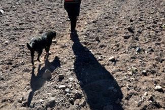 Aconcágua Trekking