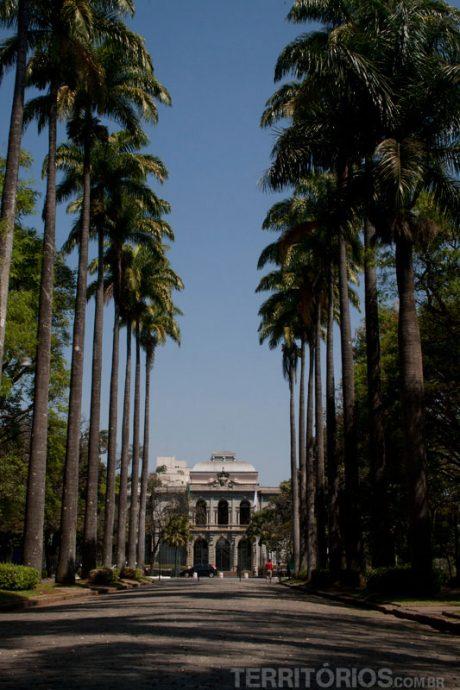 Palmeiras imperiais na Praça da Liberdade