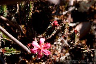 Flores fortes e delicadas ao mesmo tempo