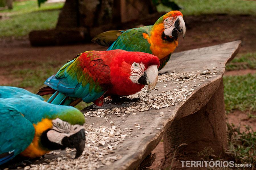 Três cores de araras