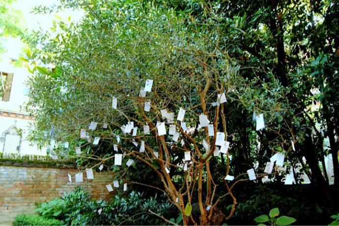 Árvore dos desejos é uma das formas em Veneza