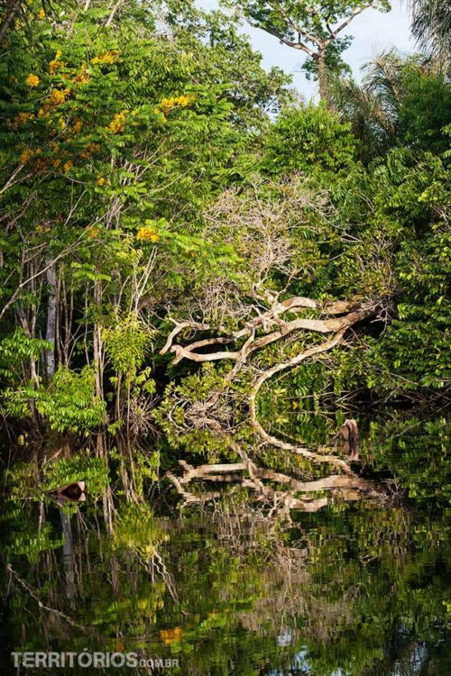Floresta alagada no Amazonas