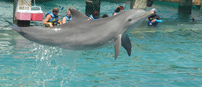 golfinhos em Isla Mujeres