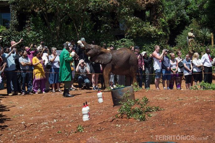 Hora da mamadeira no orfanato de elefantes