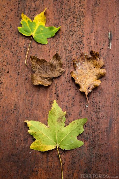 Estágios das folhas para lembrar do outono na Itália