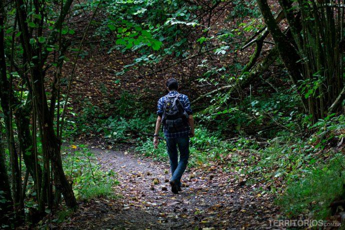 Trilha no bosque no Parco Sassi Di Roccamalatina, Apeninos