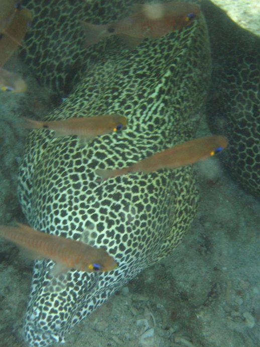 Enguia e peixes no fundo do mar do Kisite Mpunguti Marine Reserve