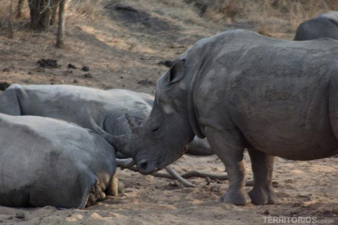 Rinoceronte na África do Sul