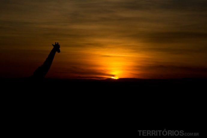 Silhueta da girafa no pôr do sol
