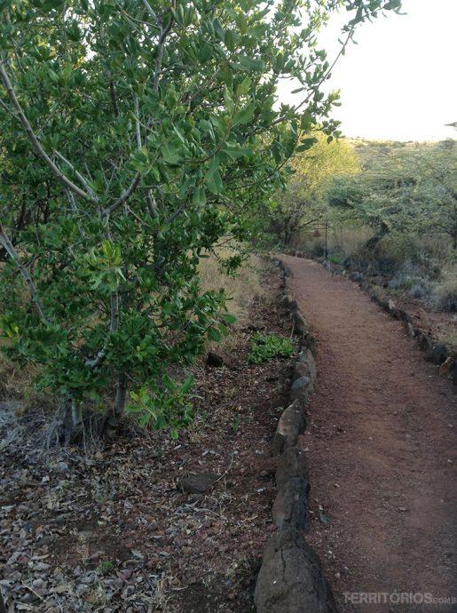 Trilhas entre as cabanas do Lewa Safari Camp