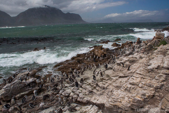 Onde ver pinguins: Betty's Bay