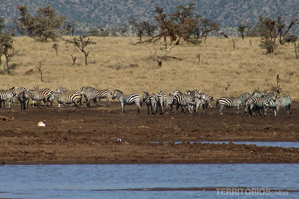 Brunch na savana africana » Territórios   Por Ro Martins