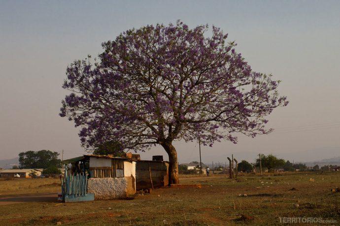 fotos da Suazilândia: Lobamba