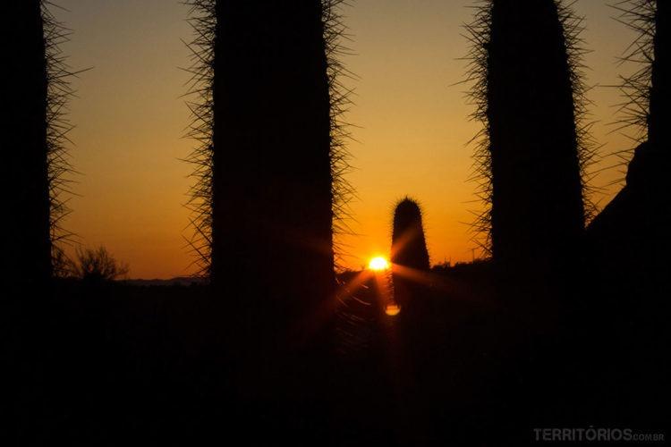 Saguaros no Desert Botanical Garden, Phoenix, Arizona - Estados Unidos