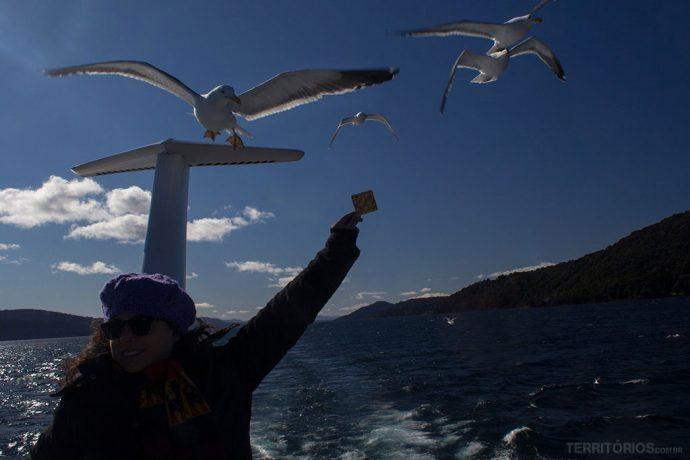 Passageiros se divertem com as gaivotas