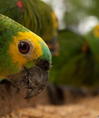 IMG_3041_pantanal_pantanal_safari_fotografico