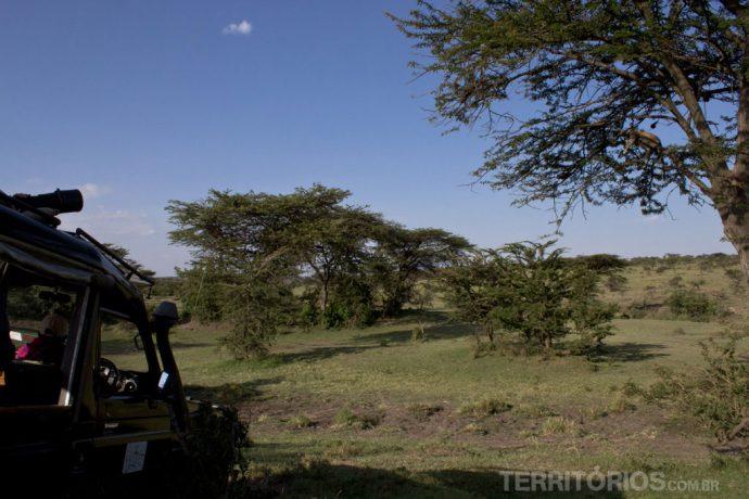 Fotógrafo profissional com lente de alcance poderosa para registrar o leopardo na árvore. Um binóculo ajuda a ver o mesmo