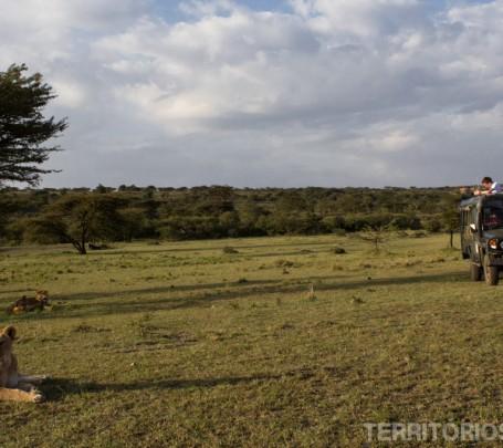 safari em maasai mara kenya