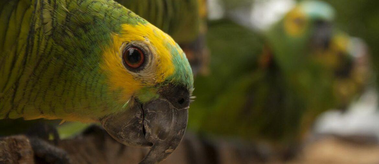 Safari fotográfico no Pantanal