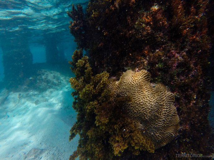 Em Providência a água é mais cristalina e perfeita pra mergulhar