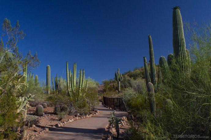 Variedade em cactos no jardim botânico do deserto