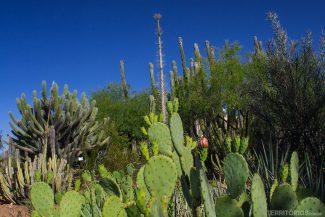 jardim botânico do deserto