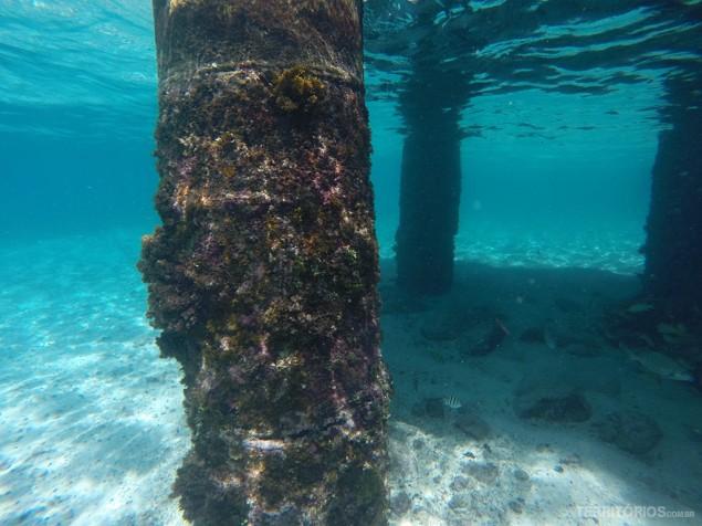 Um monte de peixes coloridos embaixo do trapiche em Crab Cay