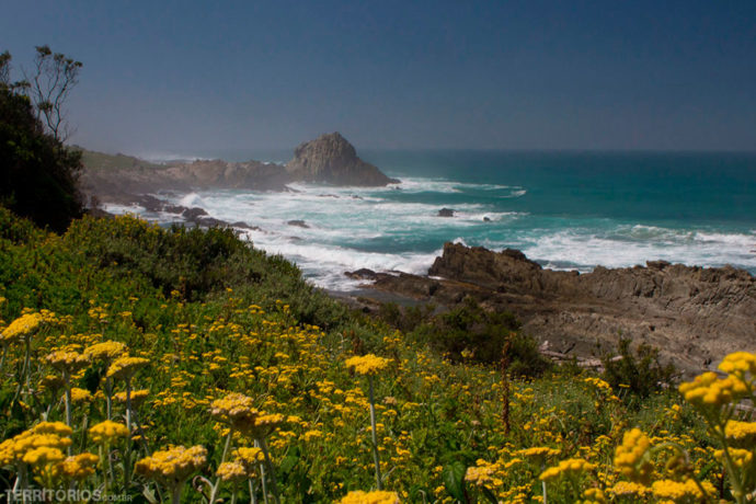 Flores silvestres alegram a paisagem da trilha mais bonita na África do Sul