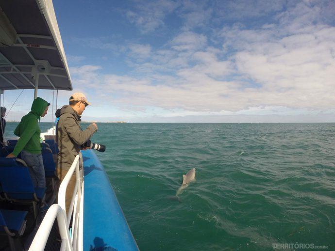 Encontro com golfinhos selvagens