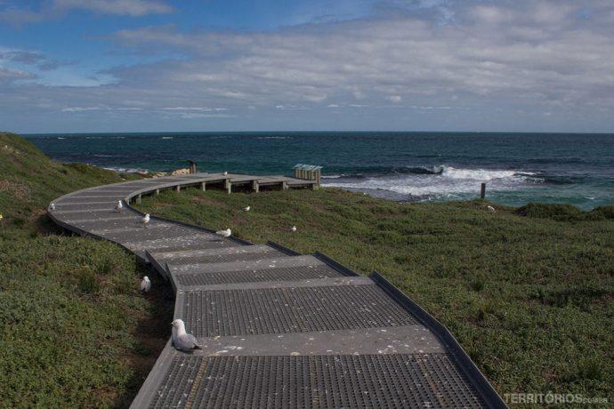 As passarelas e as gaivotas em abundância