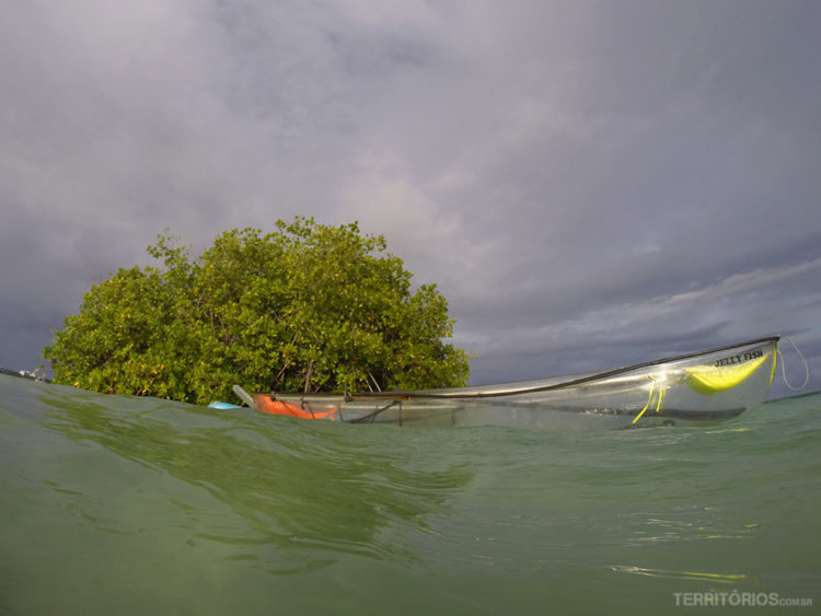 Eco Fiwi