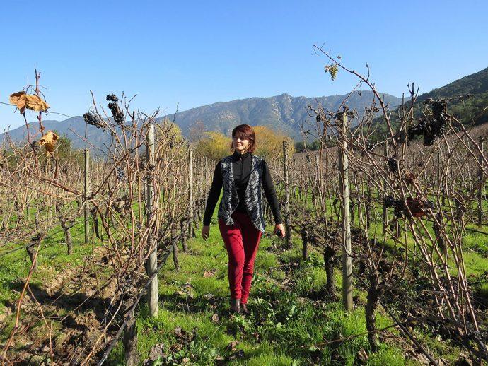 Caminhando pelas vinhas no inverno