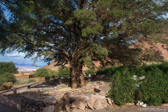 Árvore de 600 anos fez a sombra durante a massagem