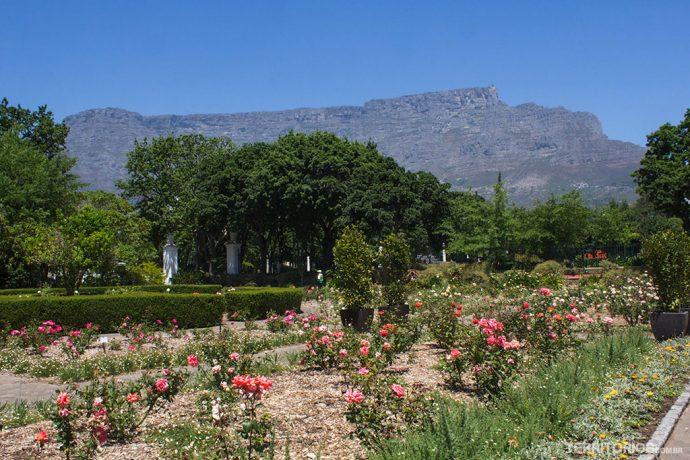 Table Mountain no cenário do Company'sGarden
