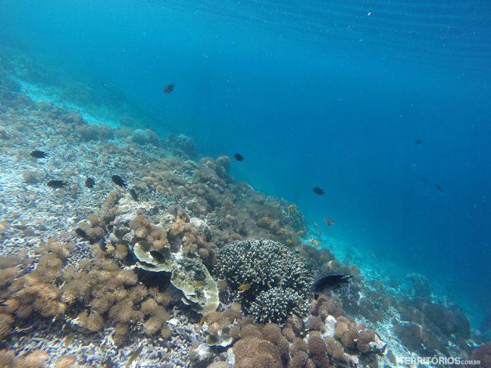 O azul e a diversidade marinha de Arborek em ponto com 30 metros de visibilidade em média