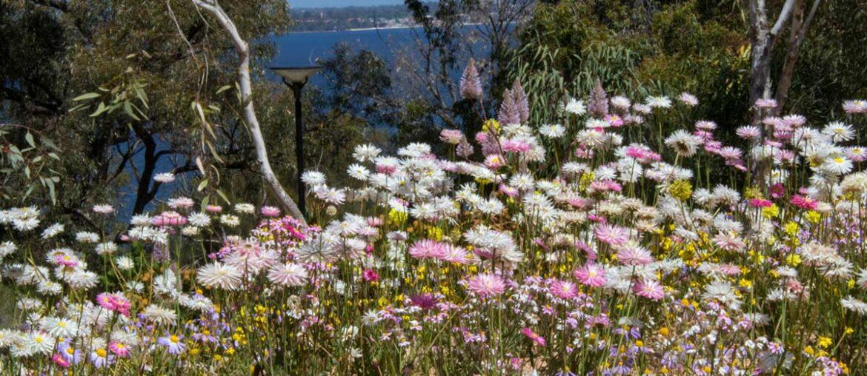 Jardim Botânico com vista no Kings Park, Perth, Western Australia - Australia